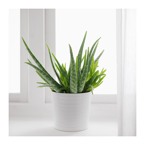 aloe vera potted plant by ikea